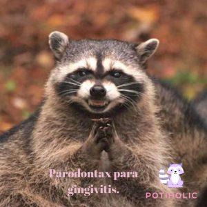 evil raccoon meme mapache pardontax
