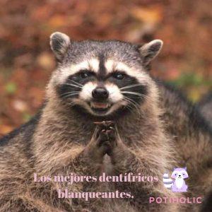 meme mapache cabron dentifricos