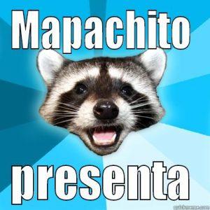 mapache meme raccoon