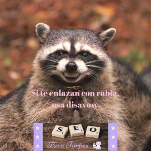 mapache maquiavelico meme SEO
