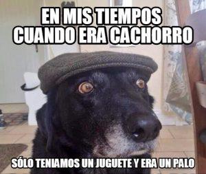 perro viejo un palo